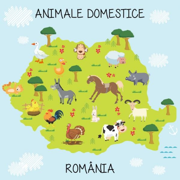 Fototapet Animale Domestice